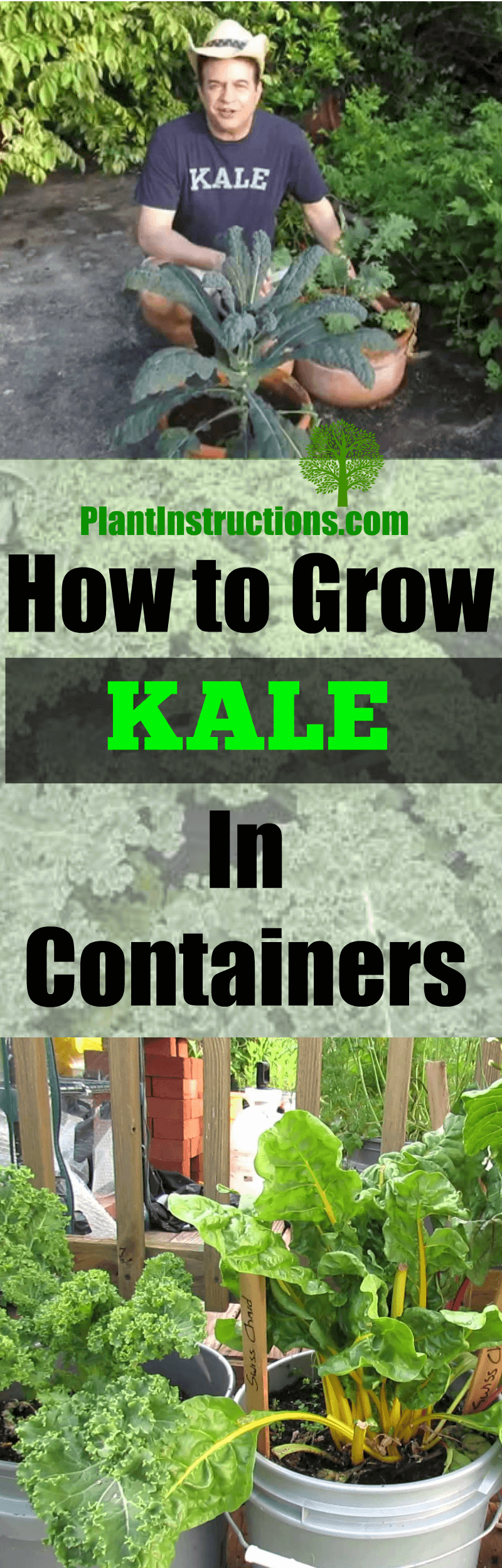 grow kale in containers