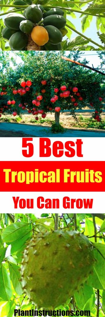 best tropical fruits to grow
