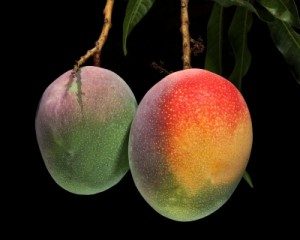 How to Plant Mango Seed