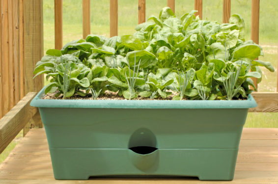 5 Container Gardening Tips