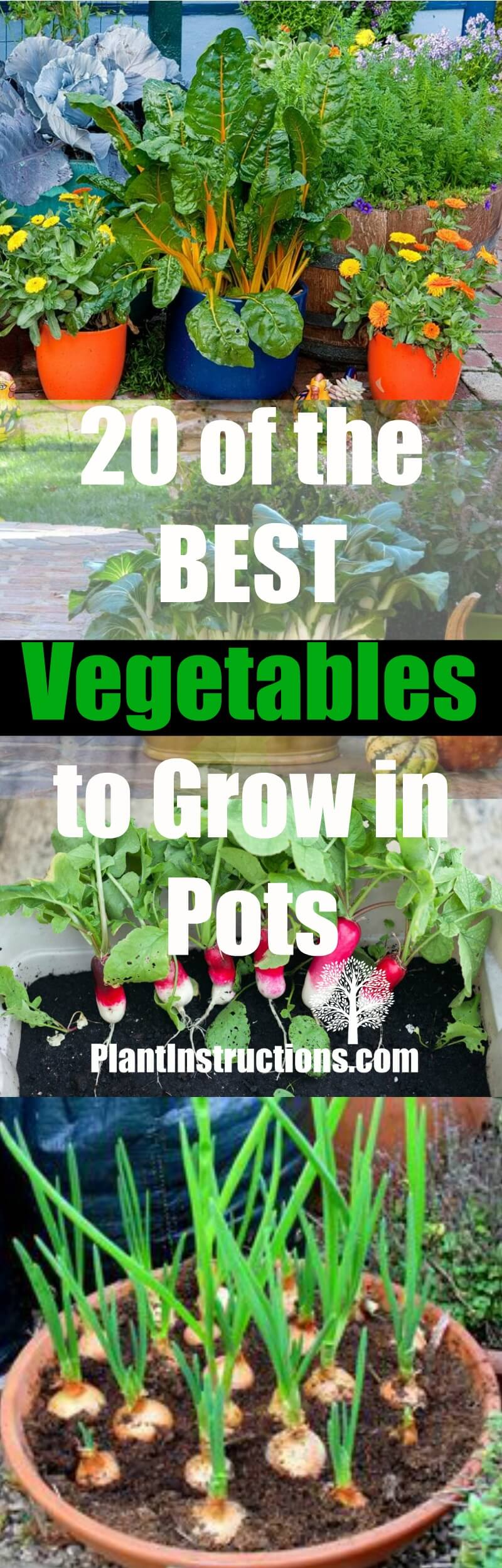20 best vegetables to grow in pots plant instructions for Easiest vegetables to grow