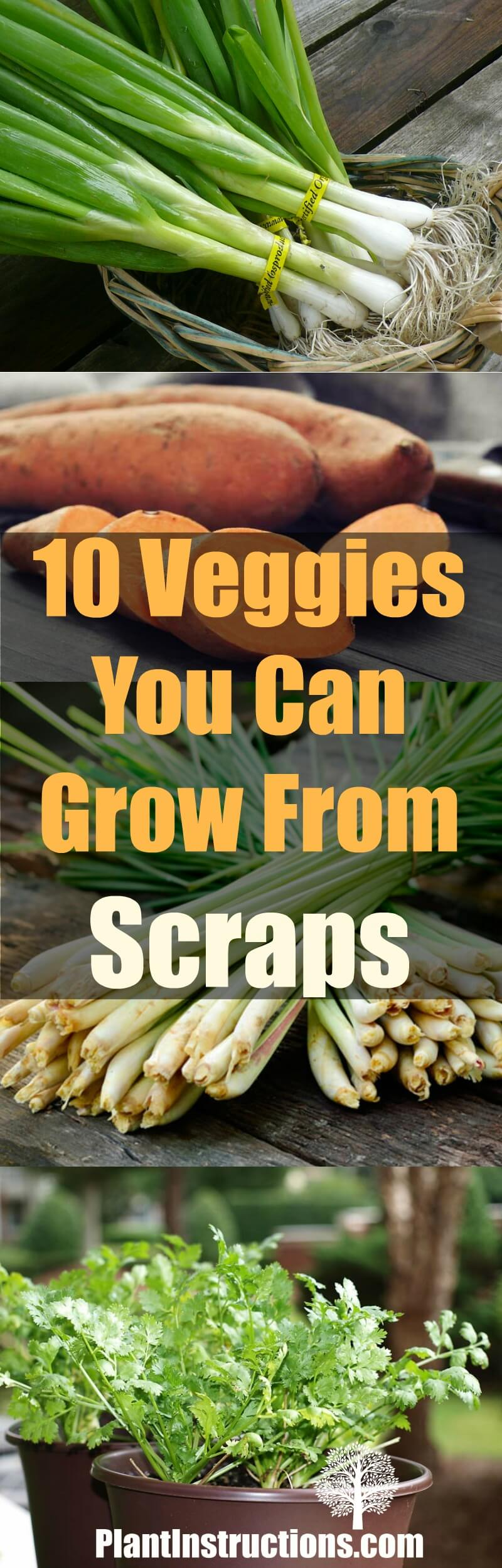 10 Veggies You Can Grow From Scraps - Plant Instructions Growing Vegetables From Scraps