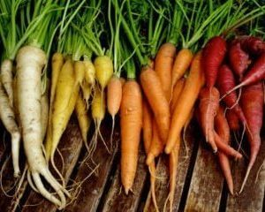 6 Tips for Growing Carrots in Your Garden