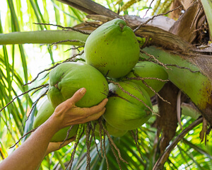 5 Best Tropical Fruits To Grow in Your Backyard