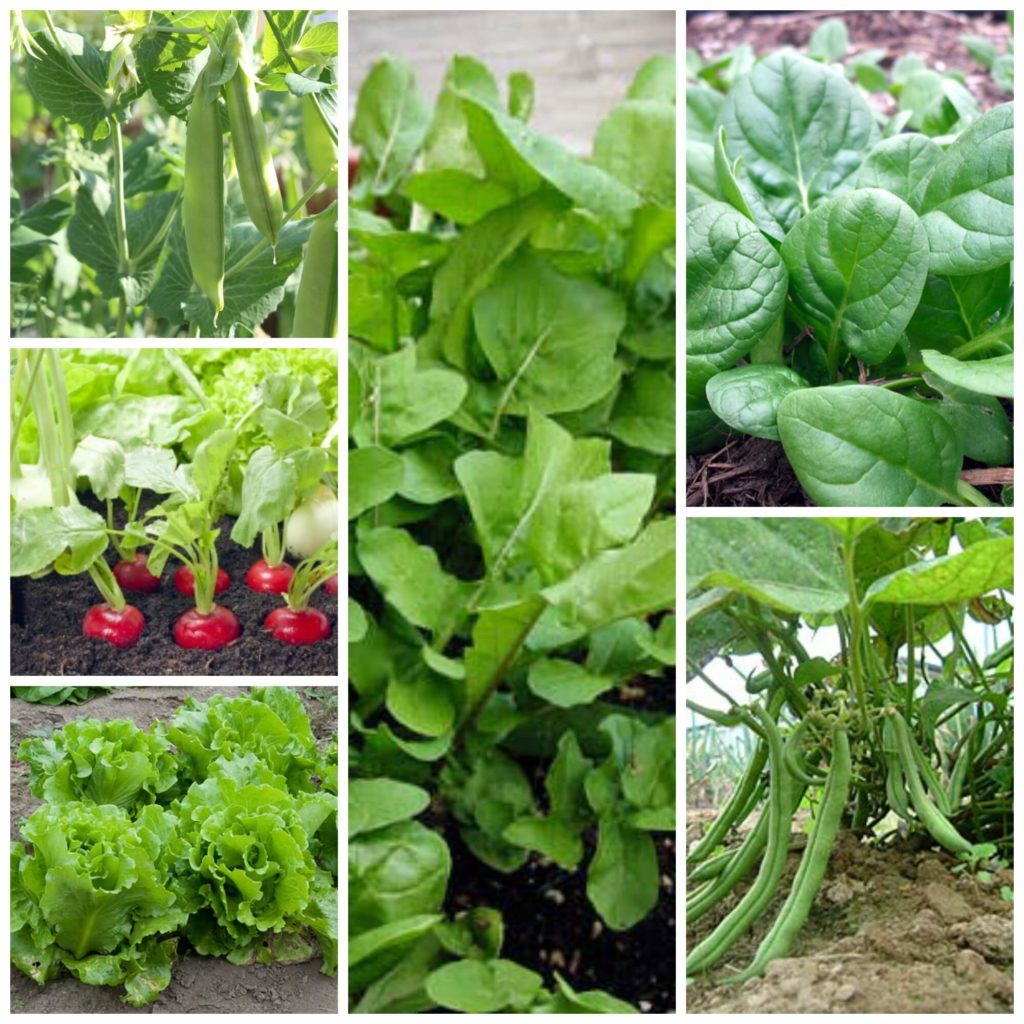 Fast Growing Veggies