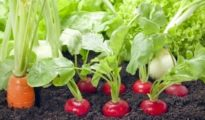 3 Vegetable Gardening Tips You Need to Know
