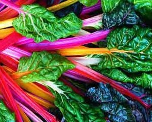 How to Grow Swiss Chard in Pots or Containers