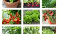 10 High Yield Vegetables You Should Plant Today