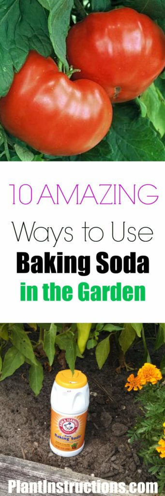 Baking Soda for Gardening