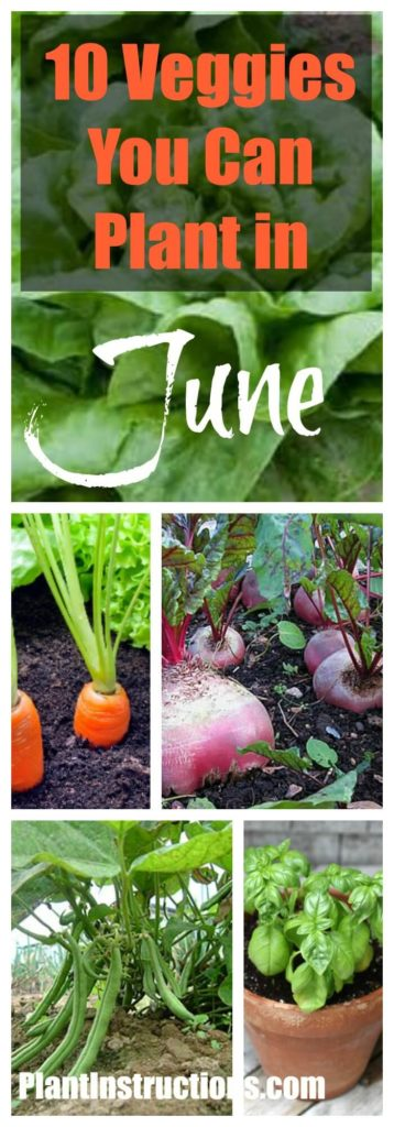 Vegetables to Plant in June