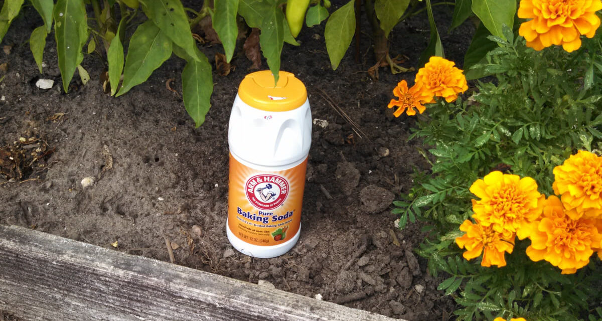 10 Ways to Use Baking Soda for Gardening