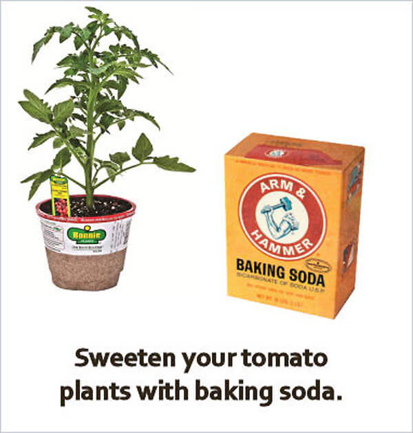 baking soda on tomatoes