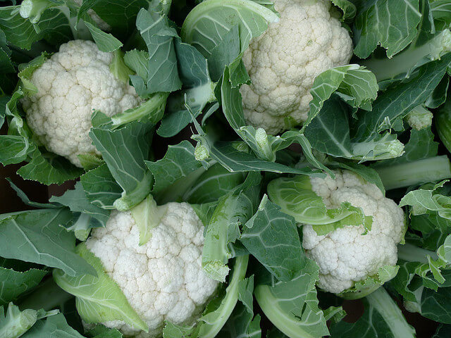 cauliflower plant