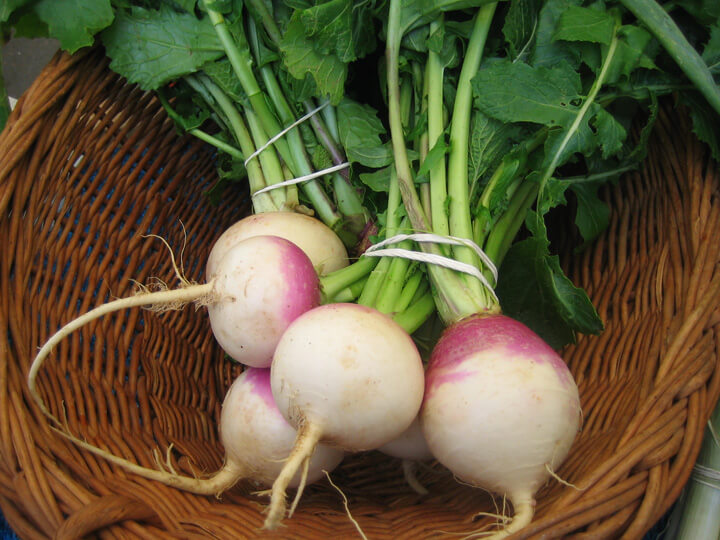 harvested turnips