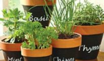 5 Tips for Growing Herbs in Containers