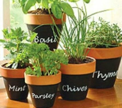 5 Dos and Don't for Planting Herbs in Containers