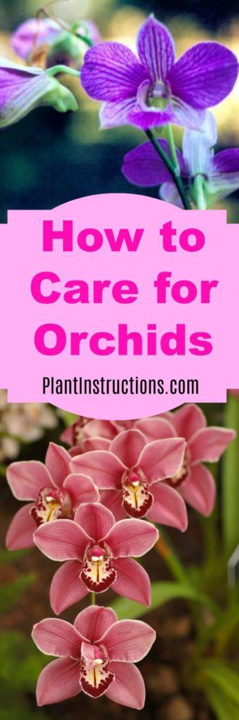 Best 28 How To Care For Orchids How To Care For