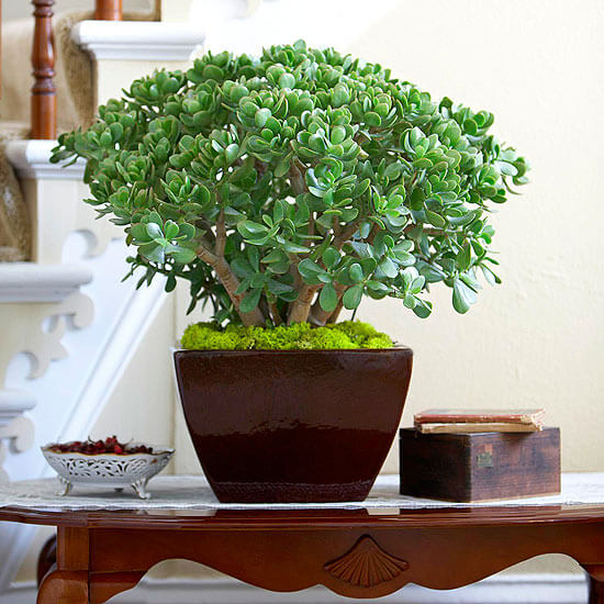 10 Best Succulent Plants for Your Home
