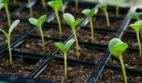 10 Seed Starting Tips You Need to Know