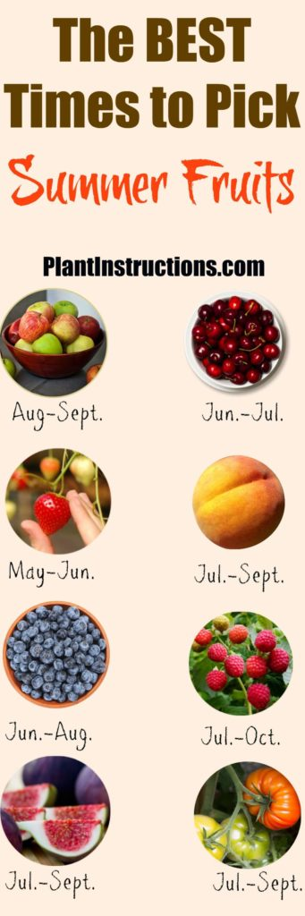 When to harvest summer fruits
