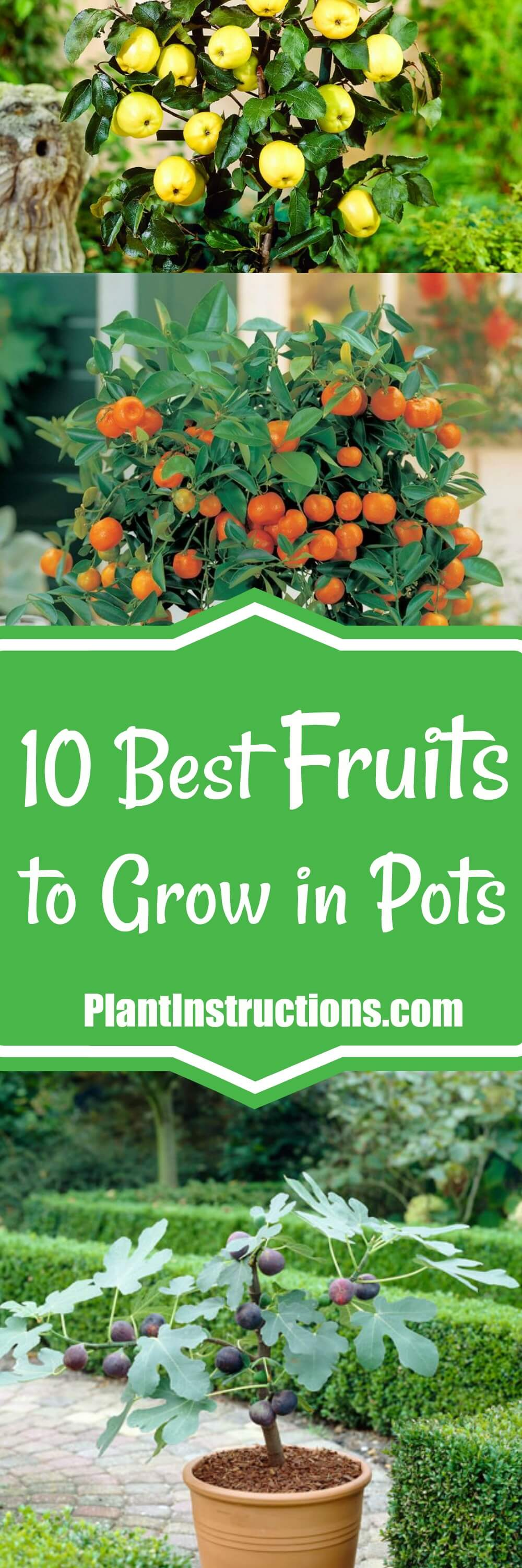 Think you can\'t grow your own fruit trees? Think again! These 10 best fruits to grow in containers or pots  will make you wanna plant right now!