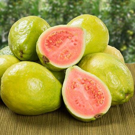 How to Grow Guava in Pots