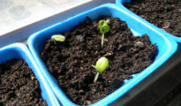 Best Tips for Starting Seeds Indoors