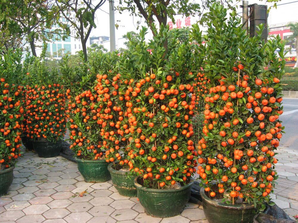 tangerines in containers