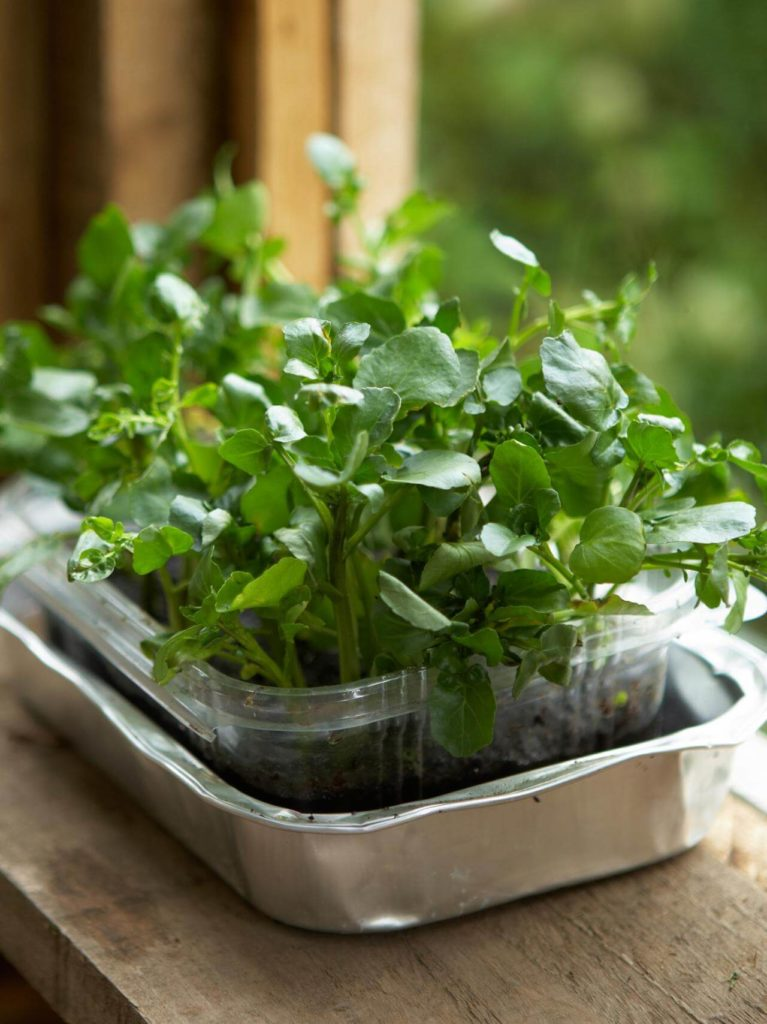 watercress in container