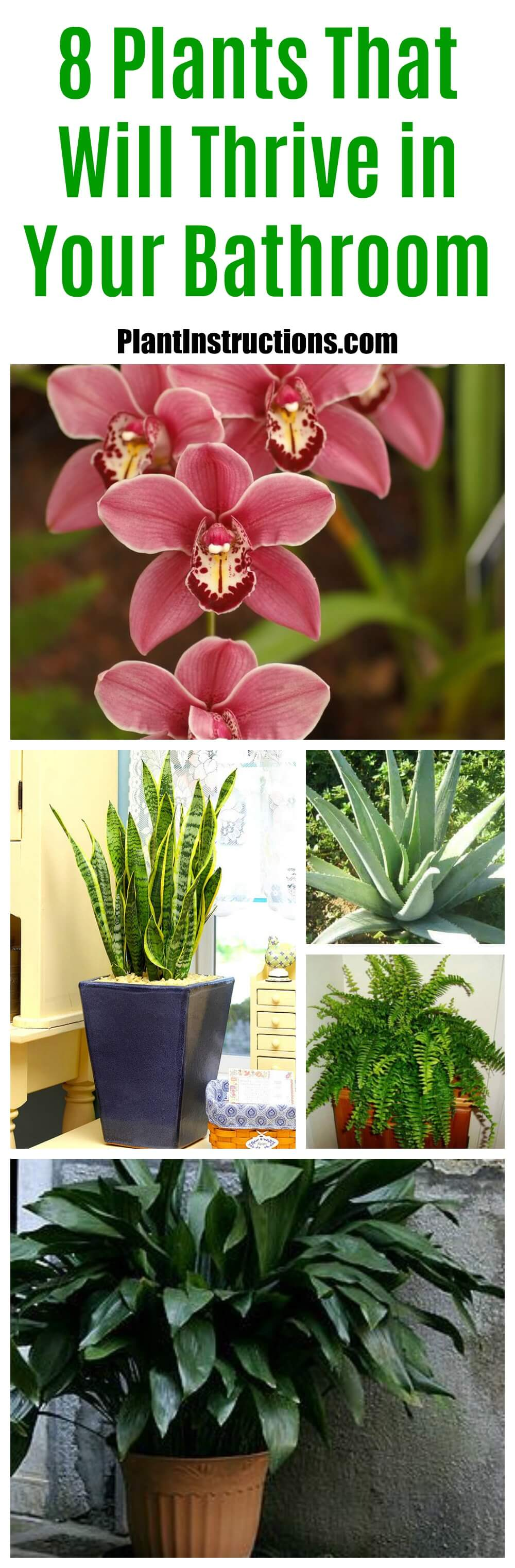 These are the 8 BEST bathroom plants to have as they not only look great, but they'll also purify the air removing toxins and other impurities.