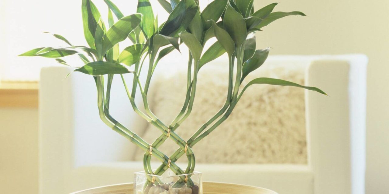8 Best Bathroom Plants to Have - Plant Instructions Best Plant For Bathroom on best plants for basements, best plants for wet areas, best plants for zone 6b, best plants for containers patio, best plants for zone 10, best plants for atriums, best plants for high desert, best plants for feng shui, best plants for glass, best plants for privacy, best plants for sun room, best plants for entryway, plants that thrive in bathrooms, best plants for pool area, best plants for around a patio, best outdoor plants, best plants for water, best plants for gardening, best plants for dark rooms, best plants for decks,