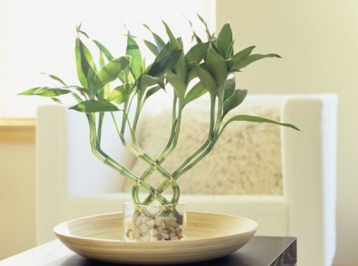 8 Best Bathroom Plants to Have