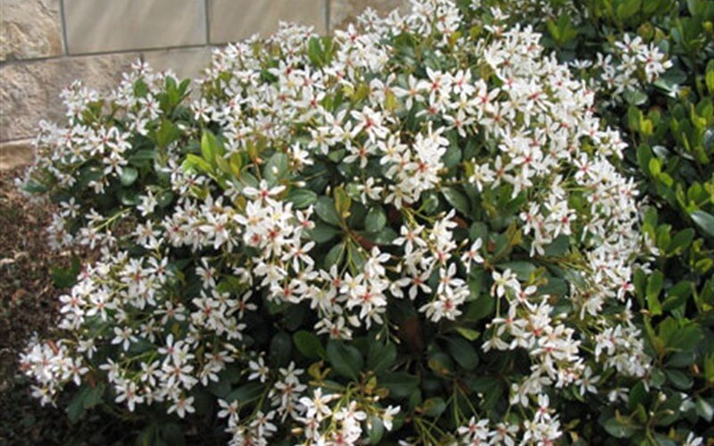 12 low maintenance plants that anyone can care for plant for Indian food hawthorne