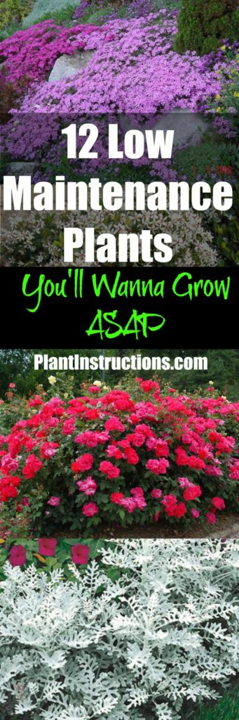 12 low maintenance plants that anyone can care for plant for Good low maintenance plants