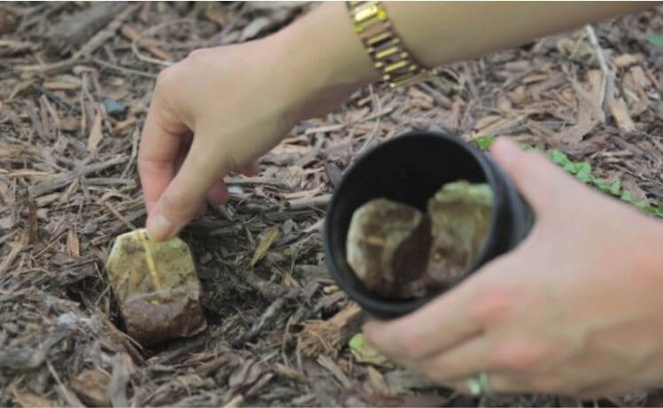 7 Ways to Use Tea Bags in the Garden That You've Never Heard Of!