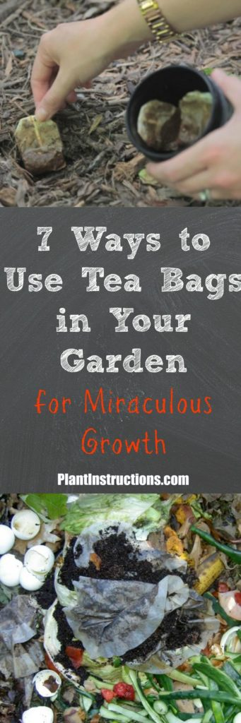 tea bags in the garden