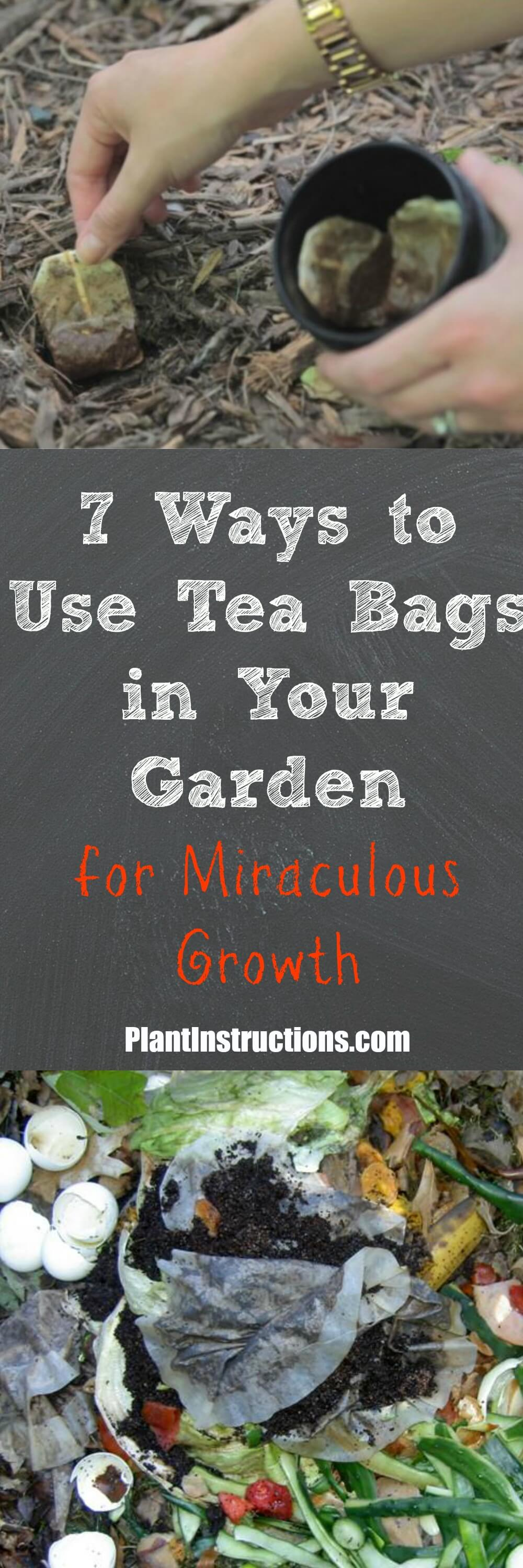 Tea bags should NEVER be thrown out! Instead, put them to good use in your garden!