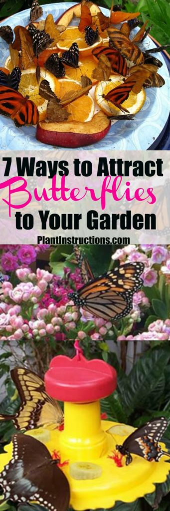 ways to attract butterflies