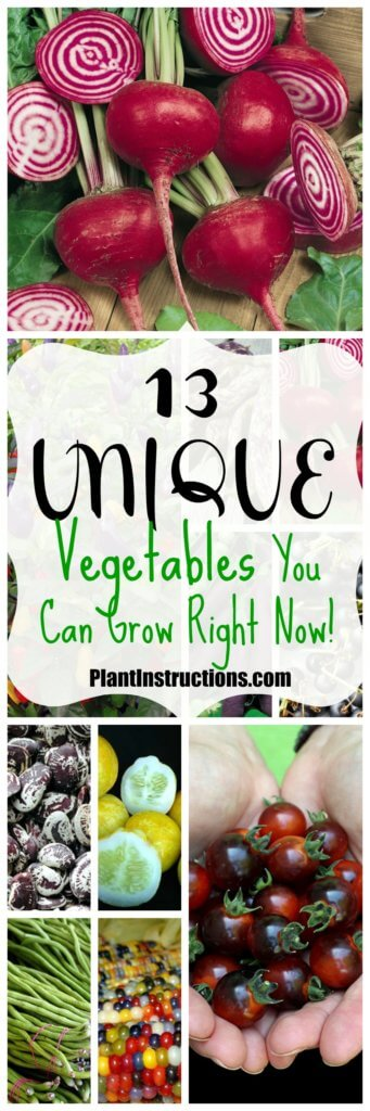 Unique Vegetables