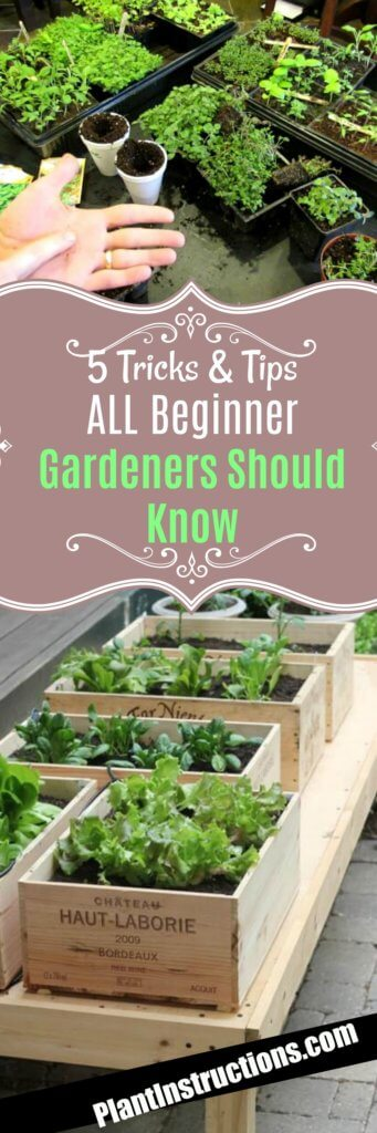 Tricks for Beginner Gardeners