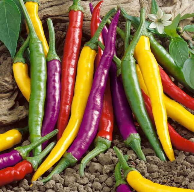 How to Grow Hot Peppers From Seeds