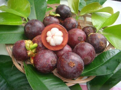 How to Grow Mangosteen Trees