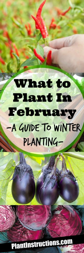 What to Plant in February