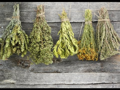 How to Dry Herbs – a DIY Guide to Drying Fresh Herbs