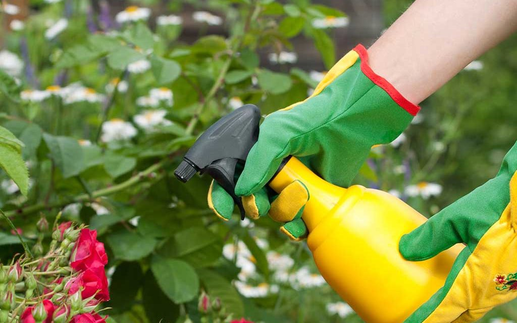 DIY Garden Insect Spray To Get Rid of Bugs