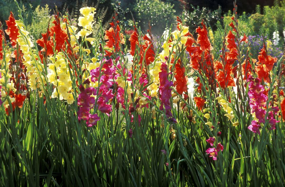 Can I Plant Wildflowers In A Tulip Bed