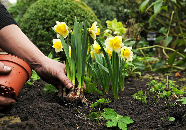 February Gardening: 6 Things to Do in February to Have a Great Garden in the Spring