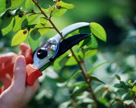 When to Prune Plants – A Guide to Pruning Fruits & Vegetables