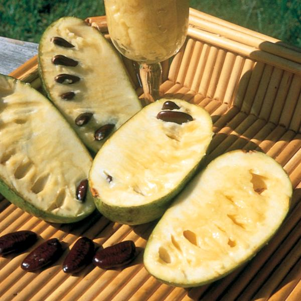 How to Grow Pawpaw Fruits
