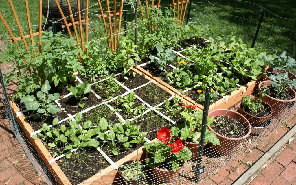 Vegetable Gardening For Beginners Guide